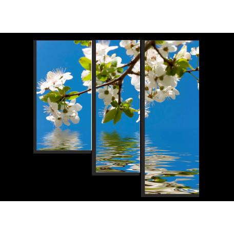 Вишнёвые цветы над водой