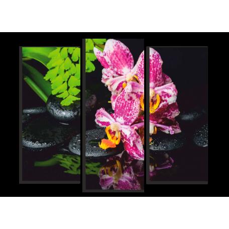 Spa яркий цветок