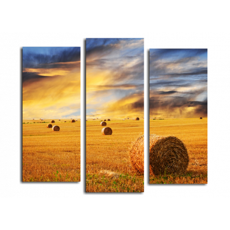 Золотой закат над полем
