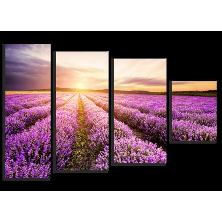 Восход солнца над полем лаванды в Болгарии